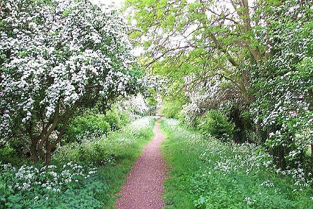 May blossoms in Lincolnshire